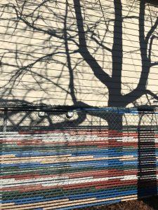 tree shadows, siding, colored fencing